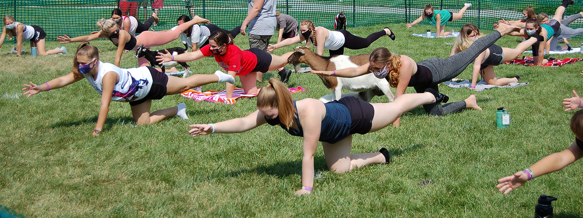 Students participate in goat yoga