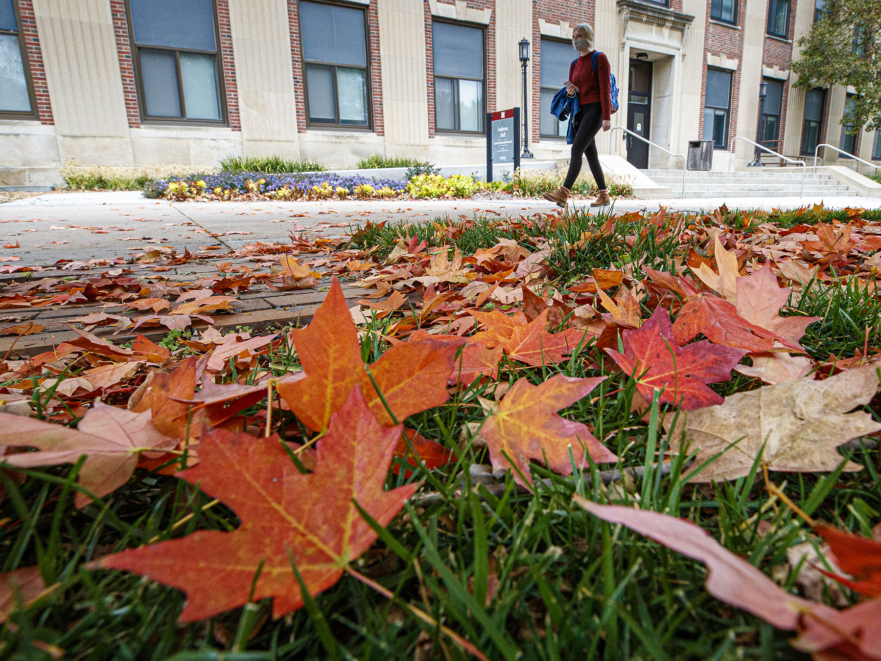 Fall leaves outside Andrews Hall. October 21, 2020. Photo by Craig Chandler / University Communication.