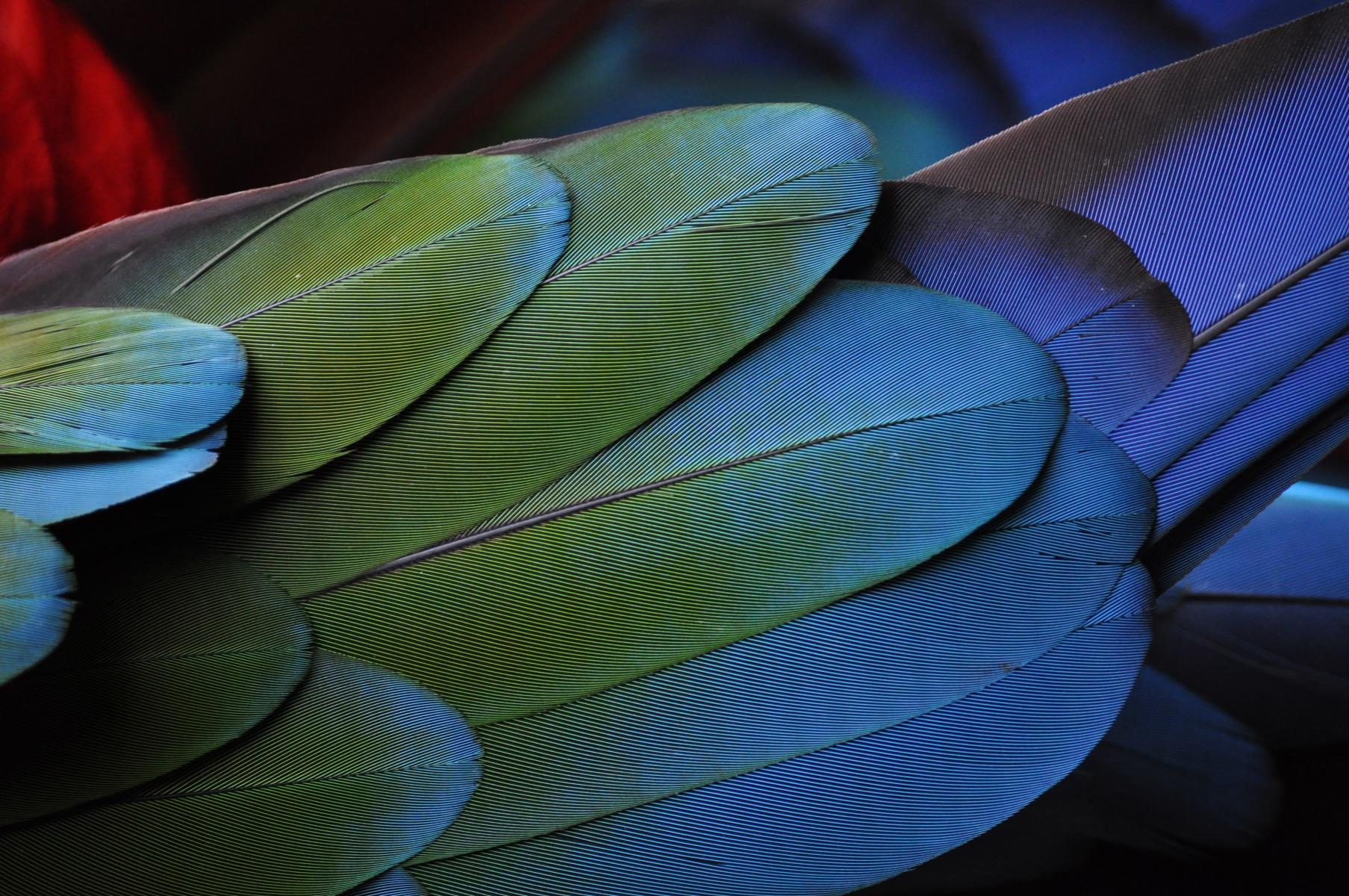 Still I rise wing   Photo by photostockeditor on Unsplash