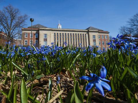 Spring flowers blooming outside Love Library. (Craig Chandler | University Communication)